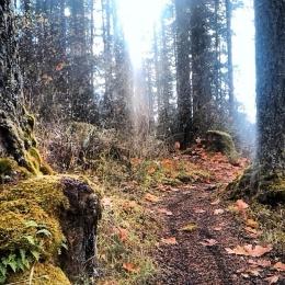 800 Road Mcdonald Forest