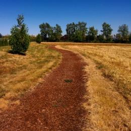 Linfield Wellness Trail