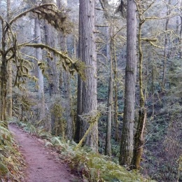 New Growth and Old Growth Trail